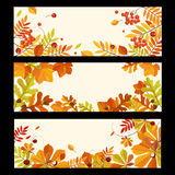 Autumn Banners with Berries and Leaves, Vector Stock Photo