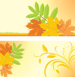 Autumn banners with maple and ash leaves Stock Photos
