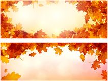 Autumn banners with orange leaves set. Stock Photos
