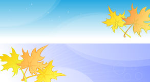 Autumn banners or poster with yellow maple leaves. Royalty Free Stock Image