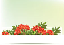 Autumn banners with rowan. Contains transparent objects. EPS10 Royalty Free Stock Photography