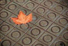 Autumn in Barcelona Stock Image