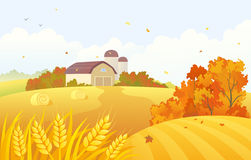 Autumn barn. Illustration of an autumn farm scene with wheat fields and barns