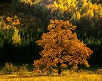 Autumn bars. Illustrations,wood landscapes royalty free stock image