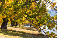 Autumn in Barton Park, Canberra. Autumnal landscape with colorful trees alley and Lake Burley Griffin the background. Bowen Park, Canberra, Australian Capital Royalty Free Stock Image