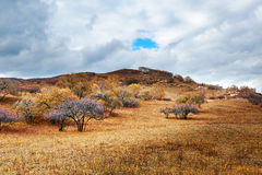 Autumn Bashang grassland and cloudscape Stock Photo