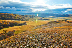 Autumn Bashang grassland sunshine Stock Images