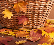 Autumn Basket Stock Afbeelding