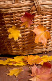 Autumn Basket Foto de Stock Royalty Free