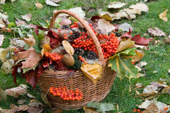 Autumn basket Stock Photography