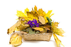 Autumn Basket Royalty Free Stock Images