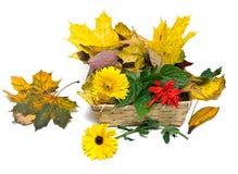 Autumn Basket Royalty Free Stock Image