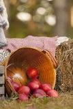 Autumn Basket of Apples Stock Photography