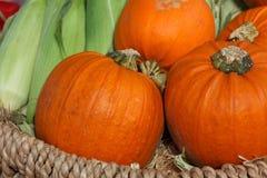 Autumn, Basket, Colorful, Corn Stock Image