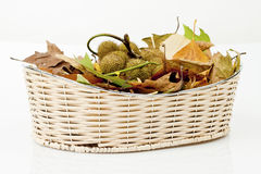 Autumn basket Stock Photo