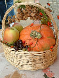 Autumn in a basket Royalty Free Stock Image