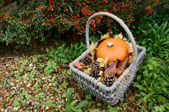 Autumn basket with pumpkin, fir cones and leaves Royalty Free Stock Photo