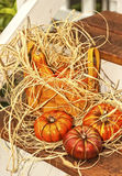 Autumn Basket and Pumpkins Stock Photo