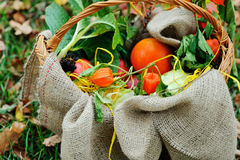 Autumn basket with sacking Stock Photo