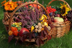 Autumn in basket Royalty Free Stock Image