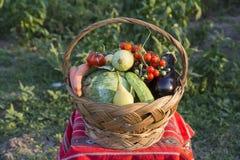 Autumn basket Stock Photography