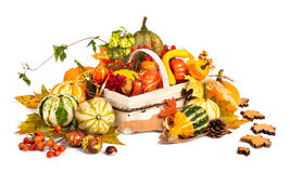 Autumn basket on white background Stock Photos