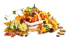 Autumn basket on white background Stock Photos
