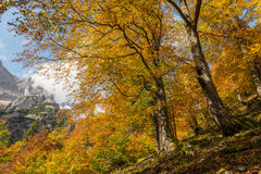 Autumn in Bavaria, Germany Royalty Free Stock Photos