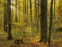 Autumn Bavarian Forrest incantato fotografie stock