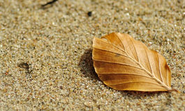 Autumn on the beach Royalty Free Stock Photo