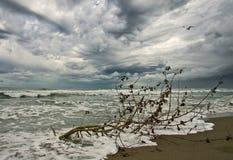 Autumn beach in thunderstorm. Broken tree on the beach during a thunderstorm in autumn royalty free stock photos