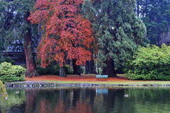 Autumn beacon hill park Stock Image