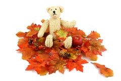 Autumn Bear. A small teddy bear sits in a pile of fall colored silk leaves, photographed on a white background Stock Photo