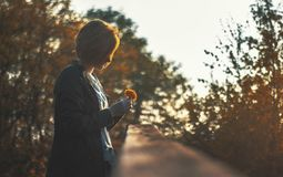 Autumn, Beautiful, Blur, Blurry Royalty Free Stock Photography