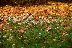 Autumn. Beautiful colorful autumn grass still green but already fallen colorful leaves, here and there pierce even the last flowers Stock Photo