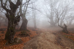 Autumn beautiful forest. Beautiful autumn forest with mist in the distance Stock Images