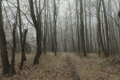 Autumn beautiful forest nature landscape in haze fog Stock Photo