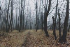 Autumn beautiful forest nature landscape in haze fog Stock Photos
