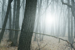 Autumn beautiful forest nature landscape in haze fog Royalty Free Stock Photography