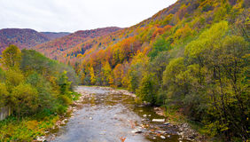Autumn beautiful forest and river. Autumn beautiful forest and river Stock Images