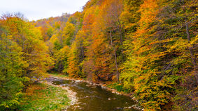 Autumn beautiful forest and river. Autumn beautiful forest and river Royalty Free Stock Images