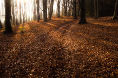 Autumn in a beautiful forest in sunny day Royalty Free Stock Photos