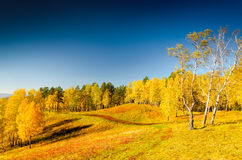 Beautiful autumn landscape. Fall season Stock Photography