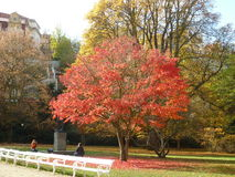 Autumn beautiful landscape. Autumn landscape, tree with colorful leaves in the park, fallen leaves Stock Photography