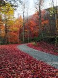 Autumn. Beautiful red color living Royalty Free Stock Image