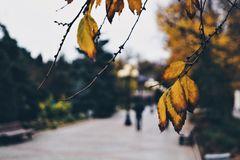 Autumn. Beautiful autumn time Stock Photography