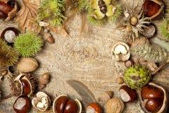 Autumn Beauty Border Stock Images