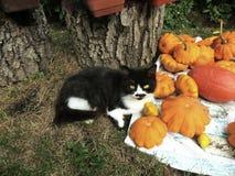 Autumn beauty. Cat, kitty, kitten royalty free stock photography