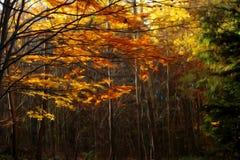 Autumn Beauty dans la forêt Illustration Libre de Droits
