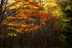 Autumn Beauty in foresta Fotografie Stock Libere da Diritti